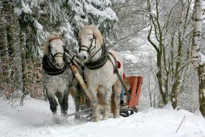 Hevoset vetämässä rekeä lumisessa metsässä