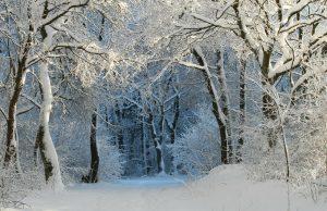 Luminen, talvinen metsä